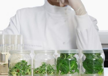 Laboratory Life experiment